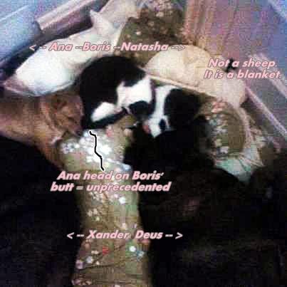 Five sleeping Beauties