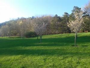 Pgh Sakura Project in North Park