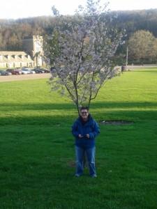Ledcat and the Cherry Tree