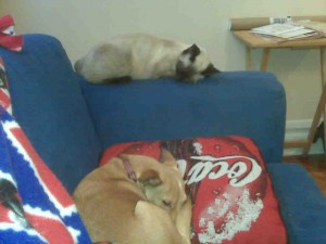These guys know how to nap. And where.