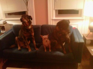 Illegal activity on the love seat. Ssshhh.
