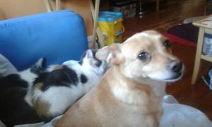 Header Ana and Kitties