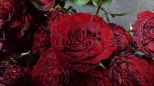 Mick Jagger flowers