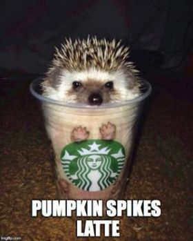 Pumpkin Spice Latte Meme