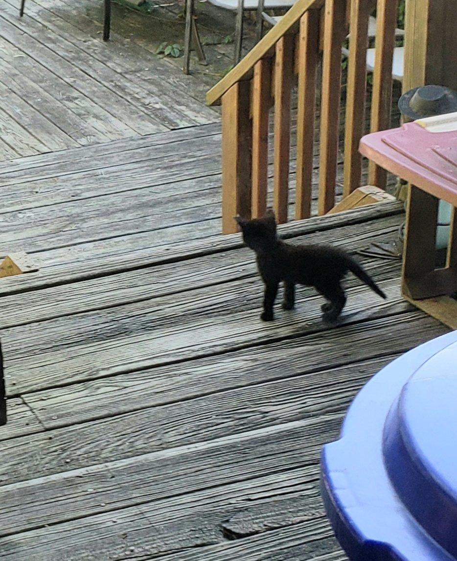 Foster Kitten Pittsburgh