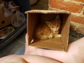 Pittsburgh Foster Kitten