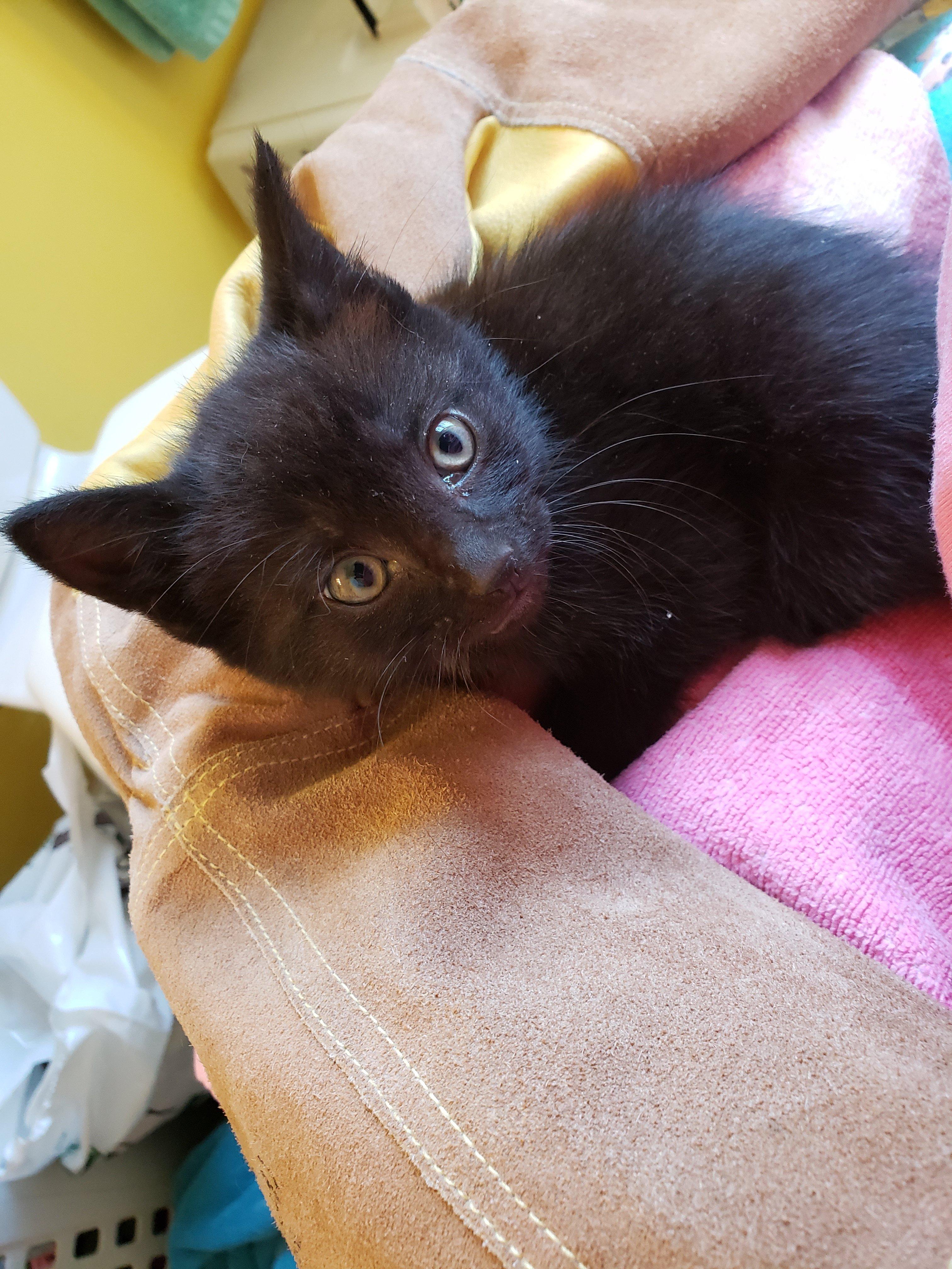 Pittsburgh Homeless Kitten