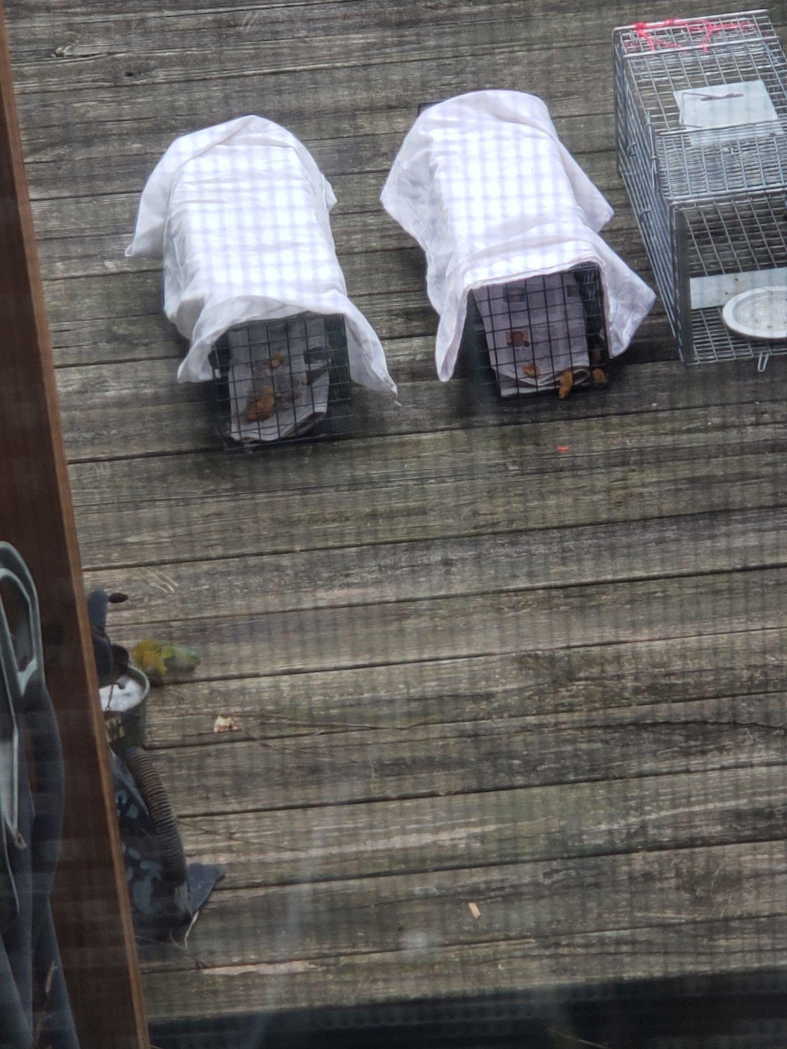 Homeless Pittsburgh Kittens