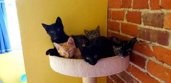 KittenCaboodle