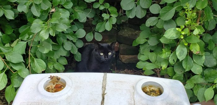 Black Cat Pittsburgh