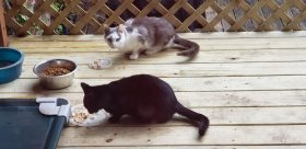 Feral Cats Pittsburgh