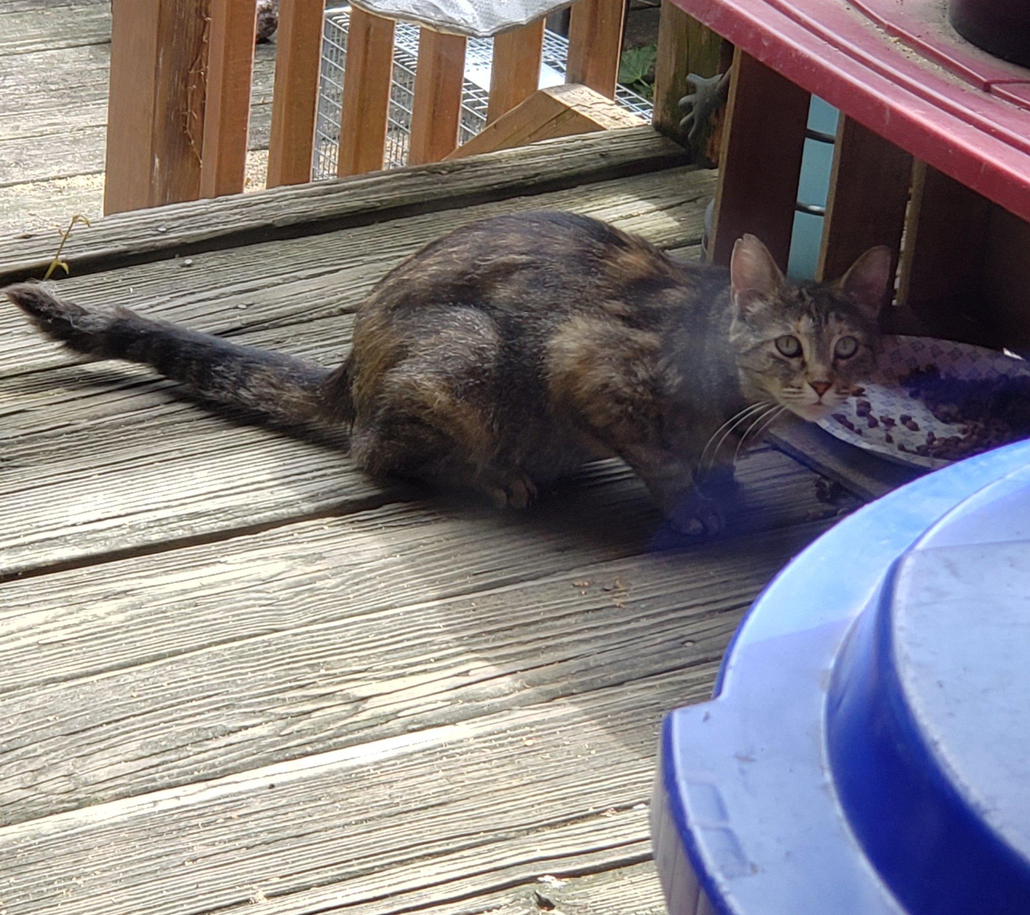 Adoptable cat Pittsburgh