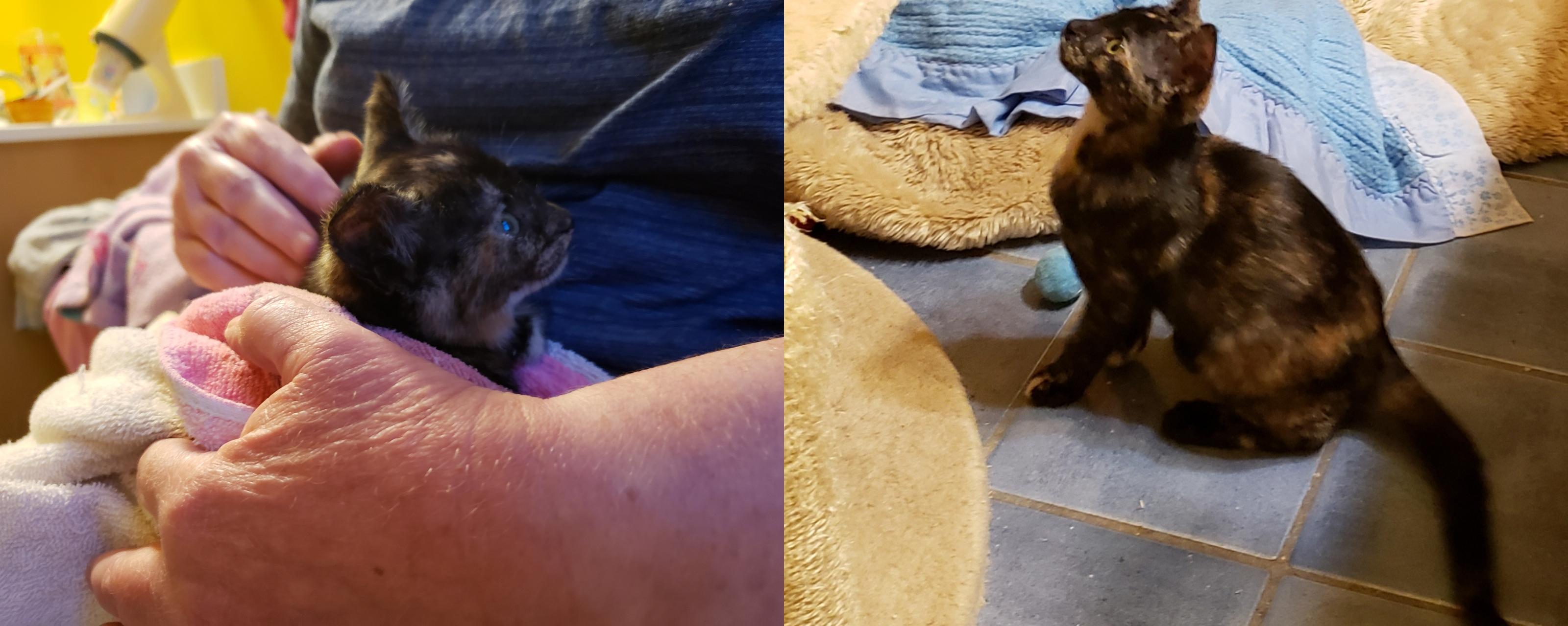 Photos of Cat Named Artemis
