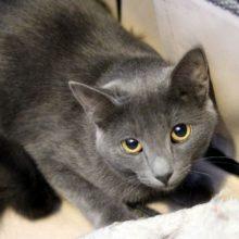 Pittsburgh Kitten for Adoption
