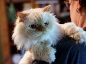 Adopt a Cat Pittsburgh