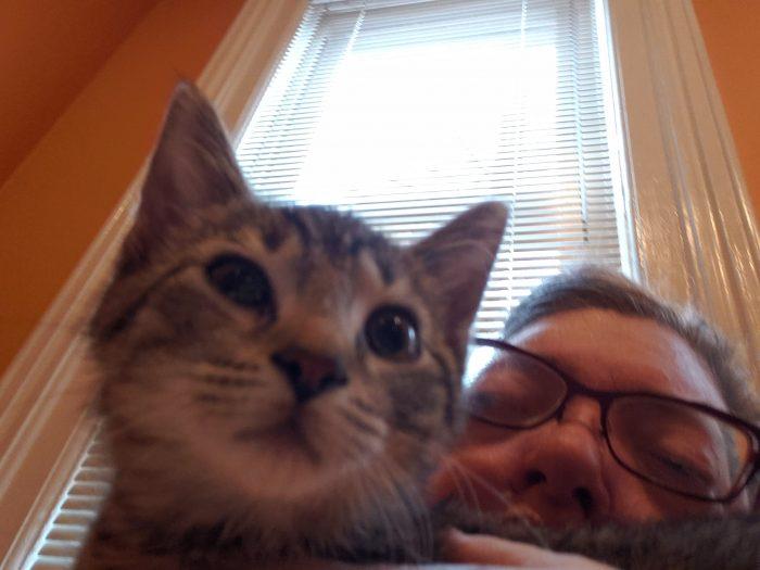 Kinzua the kitten