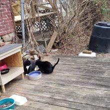 Feral Cat Pittsburgh