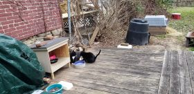 Feral Cat Pittsburgh