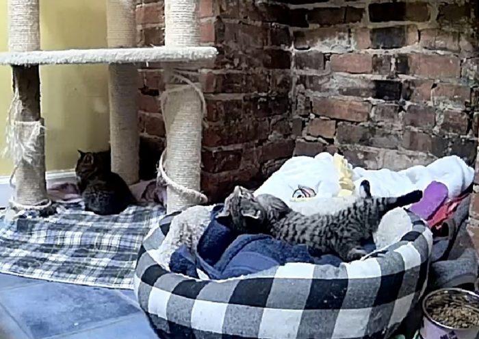 Pittsburgh Foster Kittens
