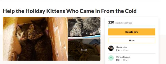 Homeless Cat Fundraiser