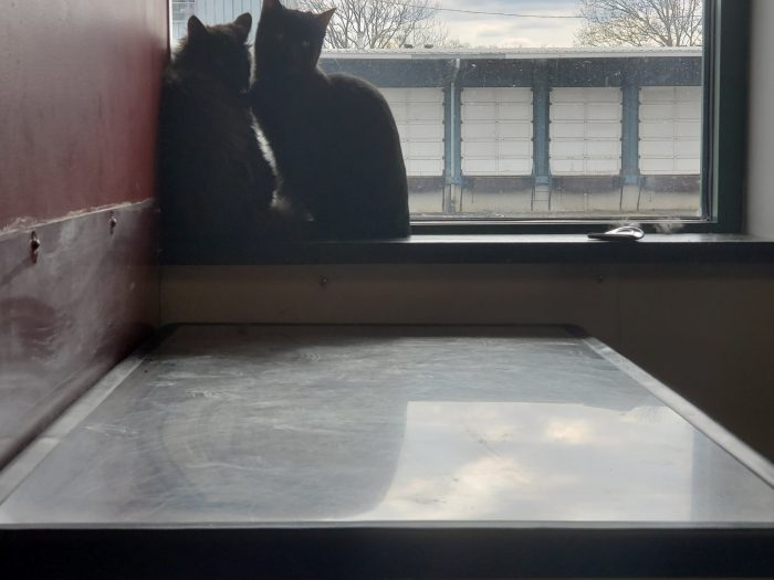 Foster Kittens Pittsburgh