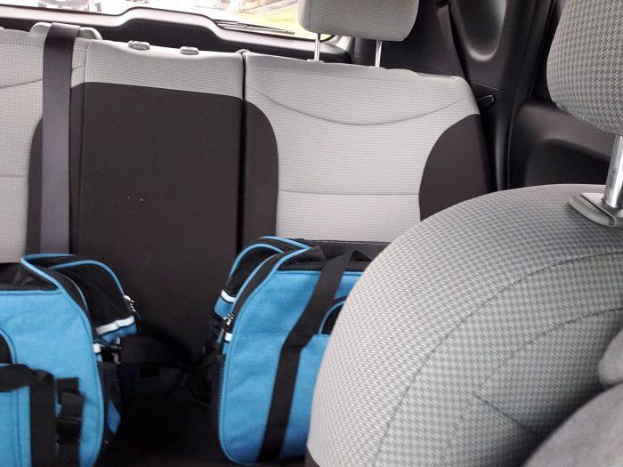 Kittens en route to vet tech team