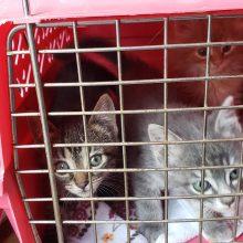 Kittens Ahoy